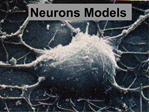 Neurons Models