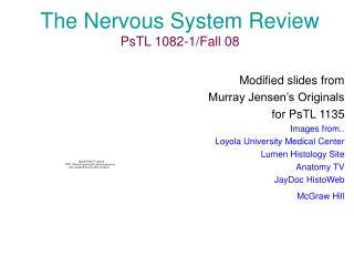 The Nervous System Review PsTL 1082-1/Fall 08