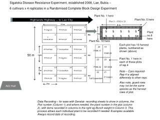 Sigatoka Disease Resistance Experiment, established 2008, Lae, Bubia –