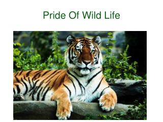 Wildlife2india.com is Safari2India website