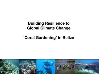 Building Resilience to  Global Climate Change 'Coral Gardening' in Belize