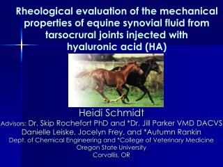 Rheological evaluation of the mechanical  properties of equine synovial fluid from  tarsocrural joints injected with  hy