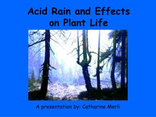 Acid Rain and Effects on Plant Life