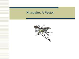 Mosquito: A Vector