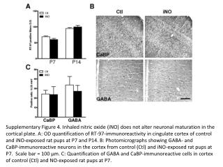 Supplementary Figure 4. Inhaled nitric oxide (iNO) does not alter neuronal maturation in the