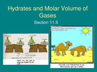 Hydrates and Molar Volume of Gases