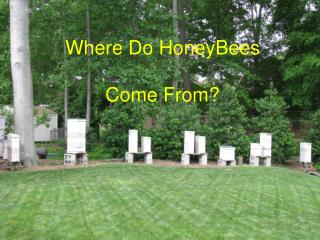 Where Do HoneyBees Come From?