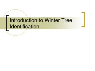 Introduction to Winter Tree Identification