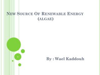 New Source Of Renewable Energy                           (algae)