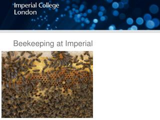 Beekeeping at Imperial