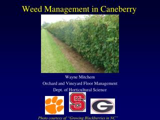 Weed Management in Caneberry