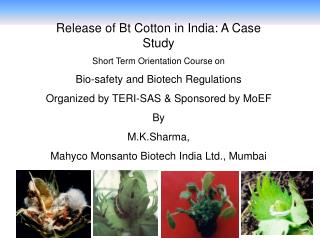 Release of Bt Cotton in India: A Case Study Short Term Orientation Course on  Bio-safety and Biotech Regulations Organiz