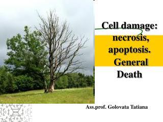 Cell damage: necrosis, apoptosis. General D eath