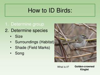 How to ID Birds:
