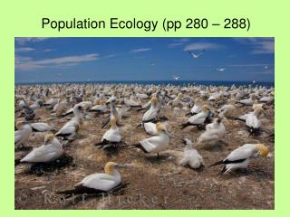 Population Ecology (pp 280 – 288)