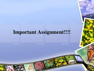 Important Assignment!!!!
