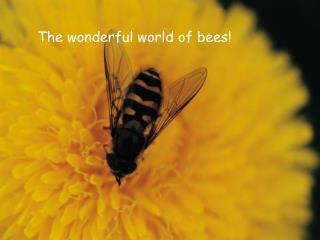 The wonderful world of bees!