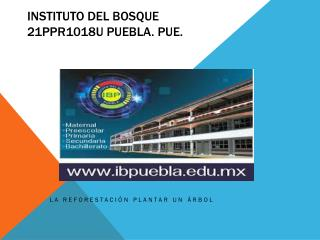 INSTITUTO DEL BOSQUE 21PPR1018U PUEBLA. PUE.