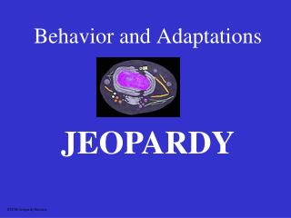 Behavior and Adaptations