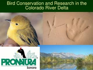 Bird Conservation and Research in the Colorado River Delta