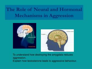 The Role of Neural and Hormonal Mechanisms in Aggression