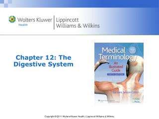 Chapter 12: The Digestive System