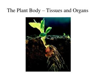 The Plant Body – Tissues and Organs