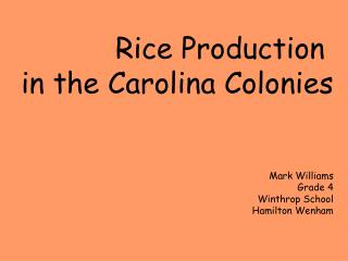 Rice Production  in the Carolina Colonies Mark Williams Grade 4 Winthrop School Hamilton Wenham