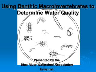 Using Benthic Macroinvertebrates to Determine Water Quality