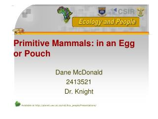 Primitive Mammals: in an Egg or Pouch