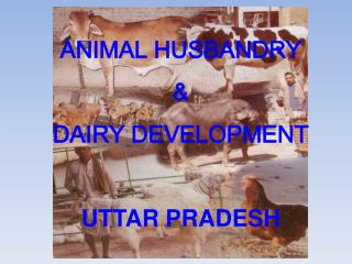 ANIMAL HUSBANDRY  &  DAIRY DEVELOPMENT UTTAR PRADESH