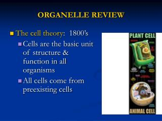 ORGANELLE REVIEW