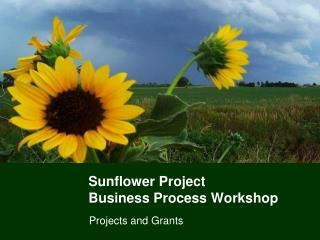 Sunflower Project Business Process Workshop