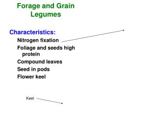 Forage and Grain Legumes