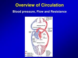 Overview of Circulation Blood pressure, Flow and Resistance