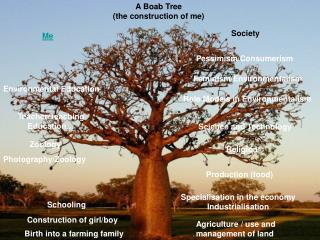 A Boab Tree (the construction of me)