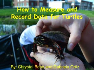 How to Measure and Record Data for Turtles