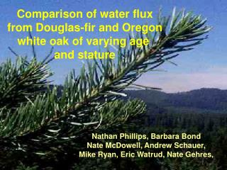 Comparison of water flux from Douglas-fir and Oregon white oak of varying age  and stature