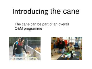 Introducing  the cane