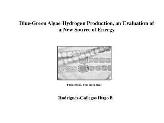 Blue-Green Algae Hydrogen Production, an Evaluation of a New Source of Energy