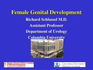 Female Genital Development