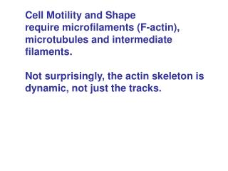 Cell Motility and Shape require microfilaments (F-actin),  microtubules and intermediate