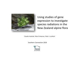Using studies of gene expression to investigate species radiations in the New Zealand alpine flora