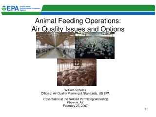 Animal Feeding Operations:  Air Quality Issues and Options