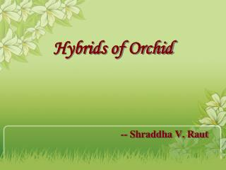 Hybrids of Orchid