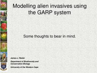 Modelling alien invasives using the GARP system