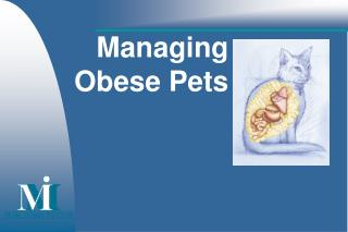 Managing Obese Pets
