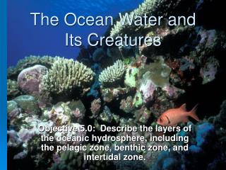 The Ocean Water and Its Creatures