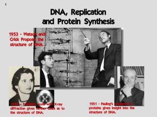 DNA, Replication  and Protein Synthesis