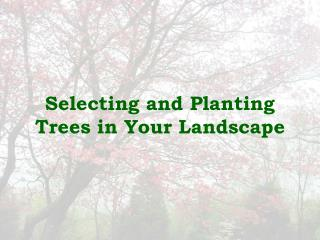 Selecting and Planting Trees in Your Landscape